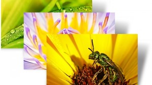 Flowers Insects - Small World - Windows 7 Theme