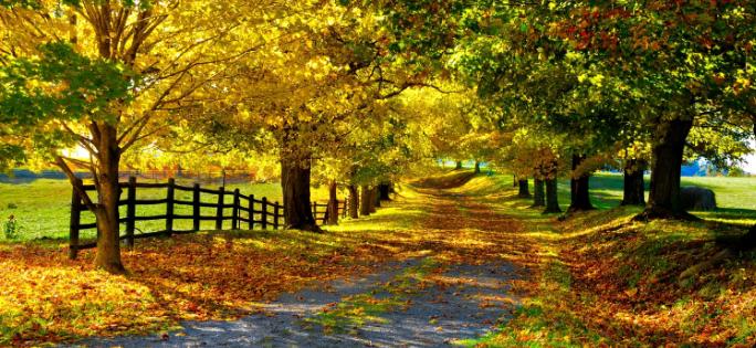 Картинки для виндовс 7 осень