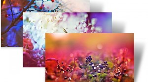 Dreamgarden Theme Windows 7 Download