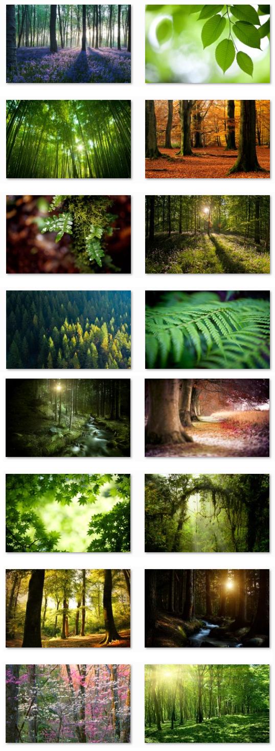 Pics Photos - Home Desktop Fun Desktop Fun Forests Theme For Windows 7