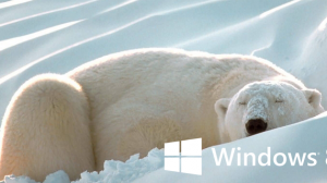 Hibernate Windows 8 bear