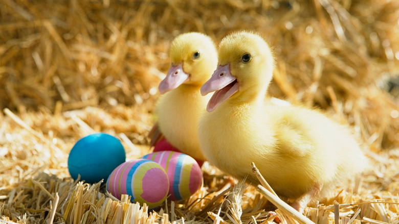 Windows 8 Easter Eggs beautiful and colorful wallpaper collection 2013