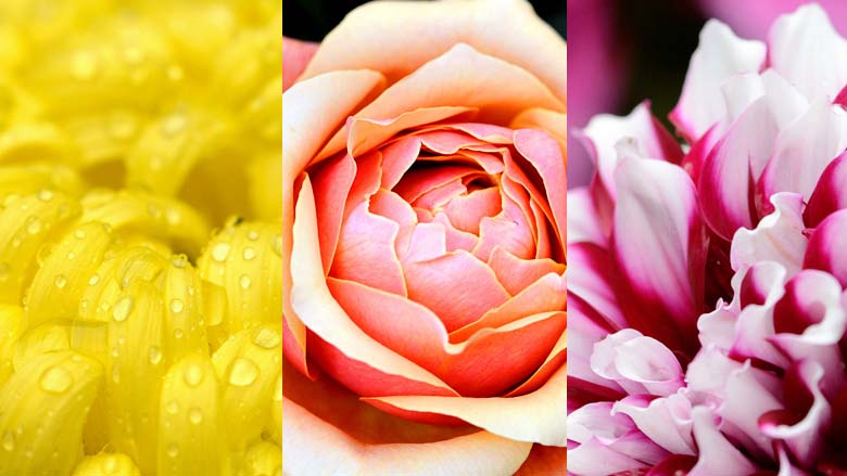 Windows Theme: Fantastic Flowers by Christ Chung 780_wide