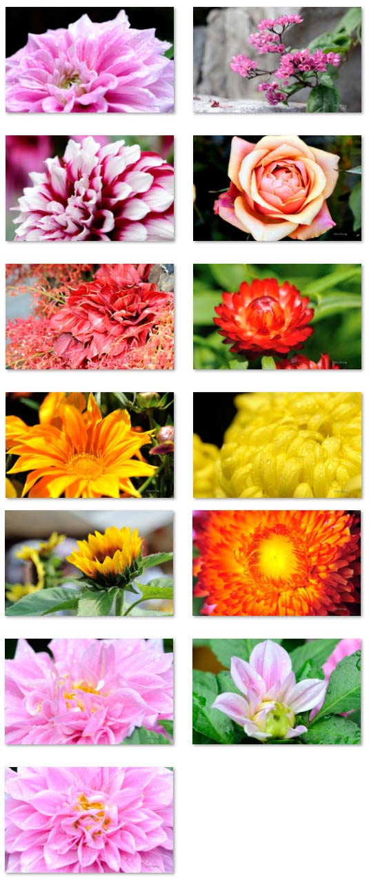 13 full colored flower wallpapers