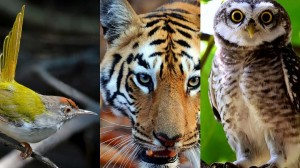 Indian wildlife for Windows 8, RT, and 7