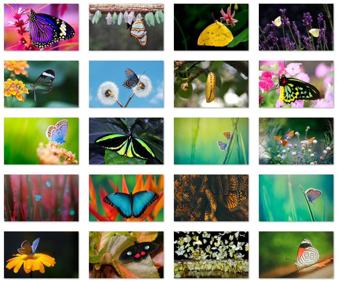 The Butterfly theme for Windows 10 (Download) • Pureinfotech