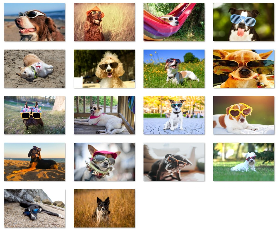 Dogs in sunglasses wallpapers