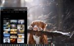 Dogs in Winder theme for Windows 10