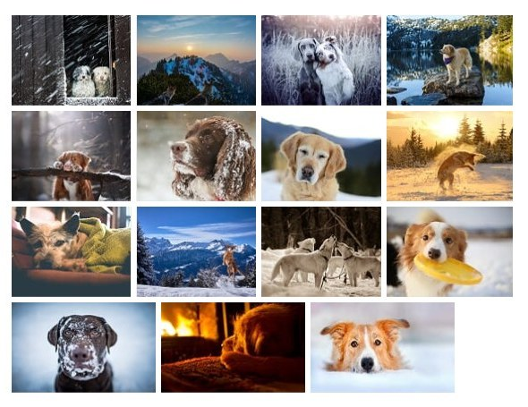 dogs in winter theme for windows 10  download   u2022 pureinfotech