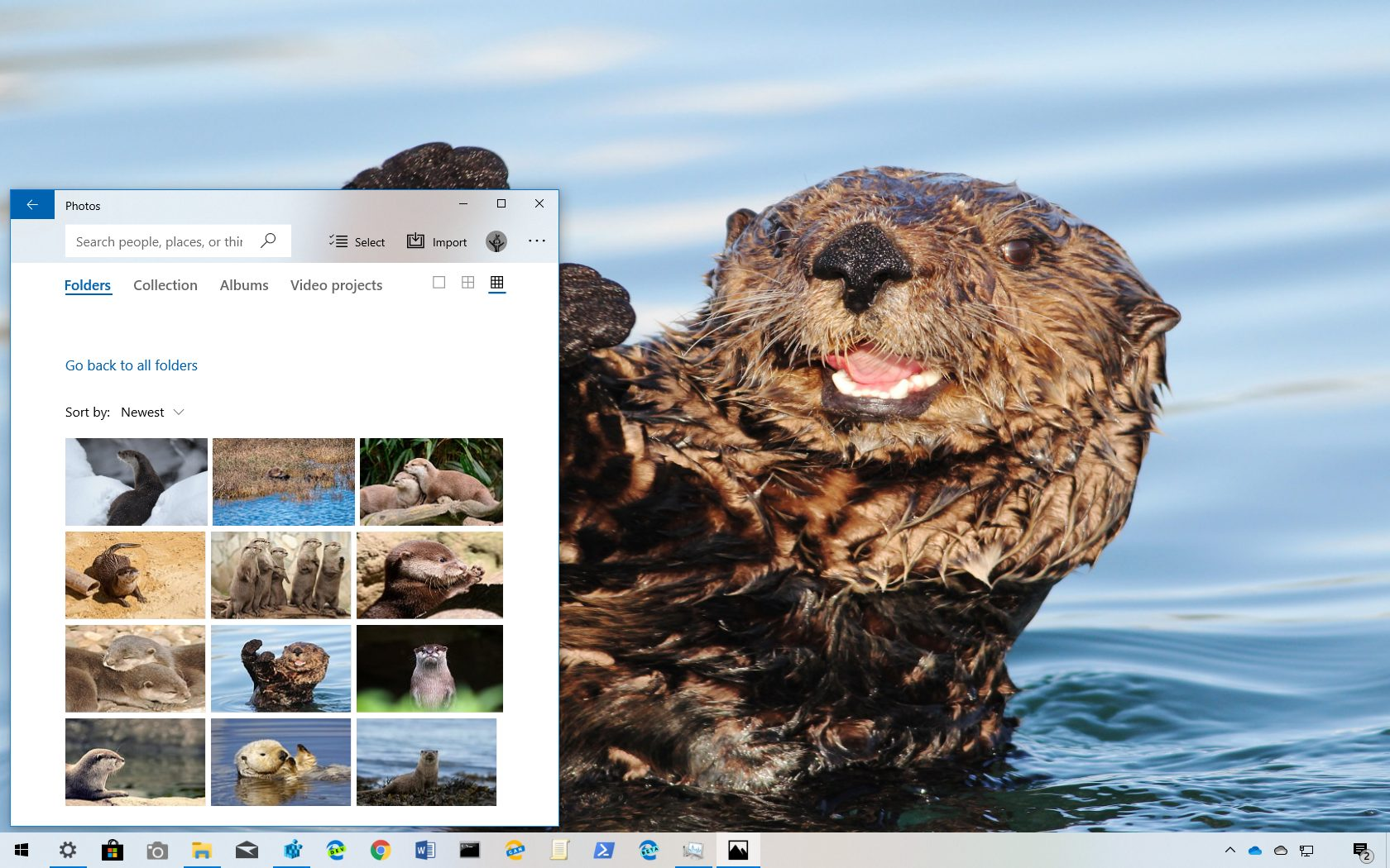 Otters theme for Windows 10