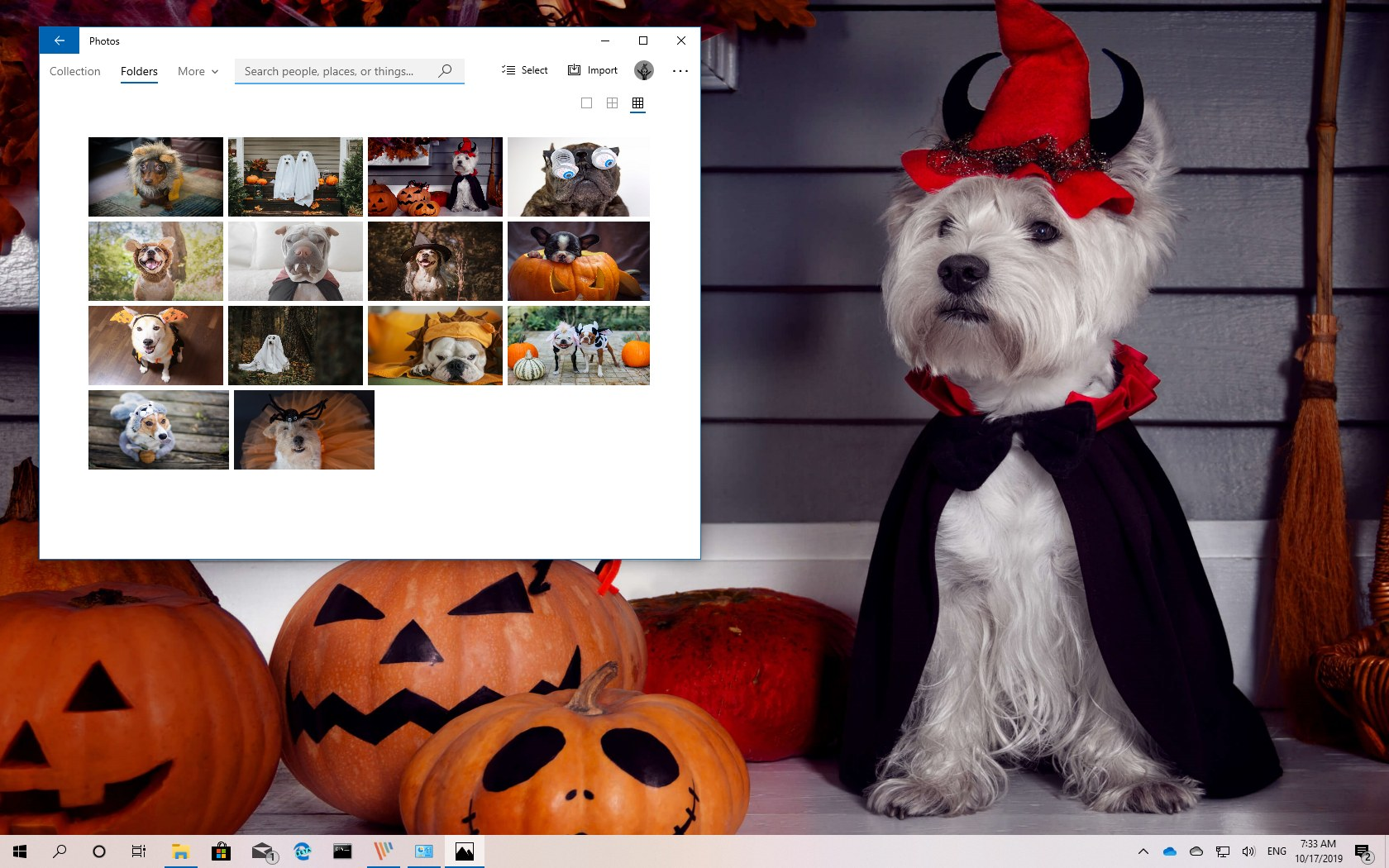 Dogs In Disguise theme