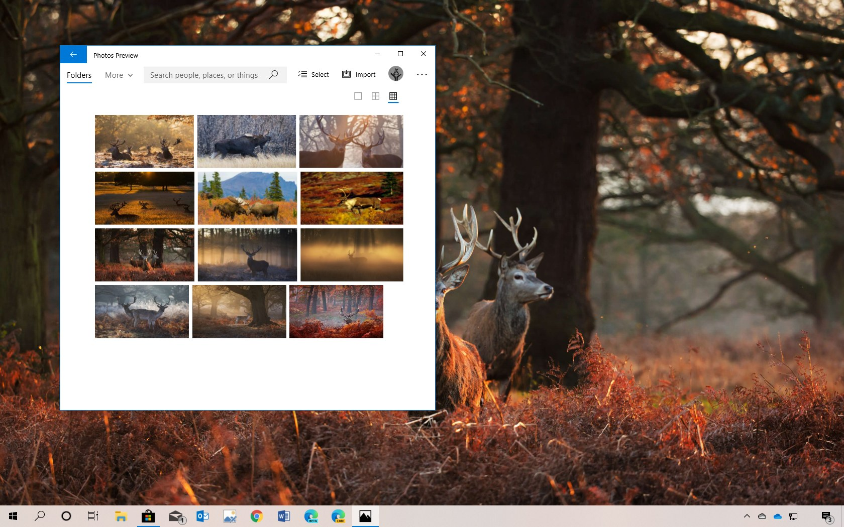 National Geographics Antlers in Autumn theme